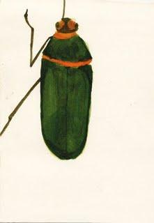 jeromeflorentaquarela